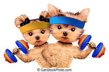 Funny dogs training with barbells and dumbbells. Concept of...