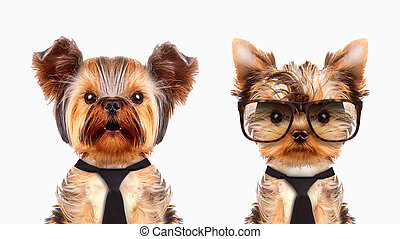 Funny dogs wearing tie, hat and glasses.