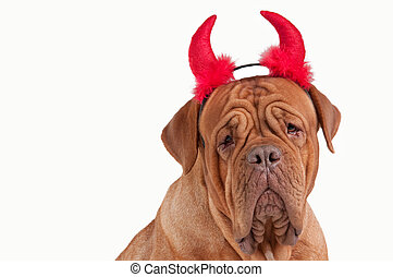 Funny Dogue De Bordeaux Devil dressed for party isolated on...