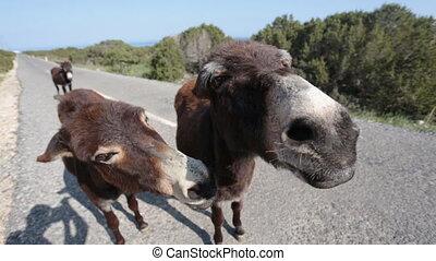 Funny donkey looking at the camera