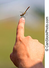 funny dragonfly on the hand