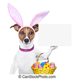 dog dressed up as bunny with easter basket and a banner