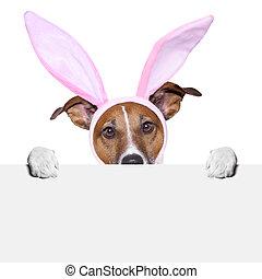 funny easter dog