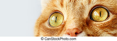 Funny ginger cat`s surprised yellow eyes close-up