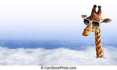 Funny giraffe with sunglasses coming out of the clouds