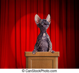 Funny hairless cat standing on a rostrum for a speech with...