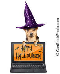 Funny Halloween dog witch hat laptop notebook wallpaper theme isolated