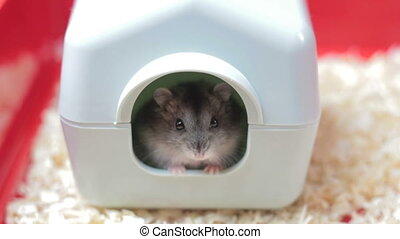 Funny hamster in the toy house