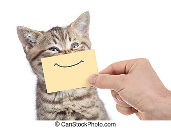 funny happy young cat portrait with smile on yellow cardboard isolated on white