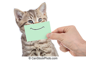 funny happy young cat portrait with smile on green cardboard isolated on white