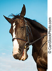 Funny horse head smiling over blue sky background