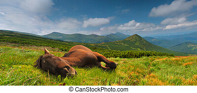 Funny horse in the Carpathian mountains