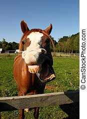 funny horse laughing