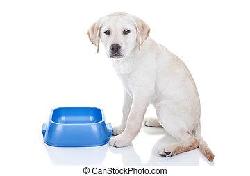 Funny Hungry Dog