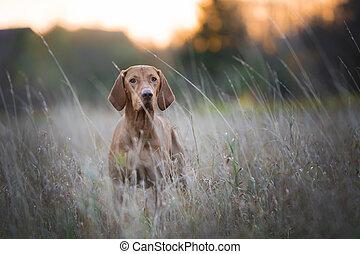 funny hunter dog in autumn