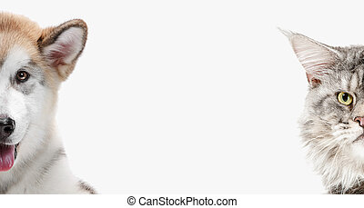 Funny image of a dog and cat looking at the camera