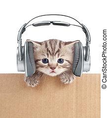 Funny kitten cat in headphones in cardboard box