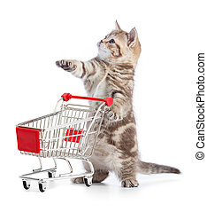 Funny kitten cat with shopping cart isolated