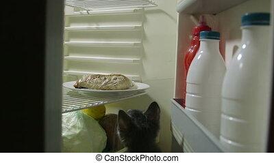 Funny kitten eating at night inside the fridge