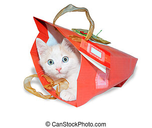 Funny kitten in red packet