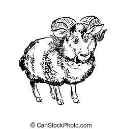 Funny Lamb - Hand Drawn Sketch of Cartoon Funny Lamb...