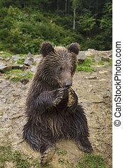 Funny Little Bear Eats