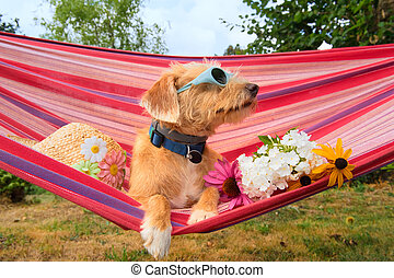 Funny little dog on vacation in hammock