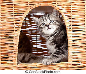 funny little kitten sitting inside wicker cat house