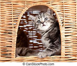 funny little kitten sitting inside wicker cat house