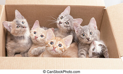 funny little kittens in a box