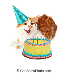 Funny Mad Birthday Cat With Cake