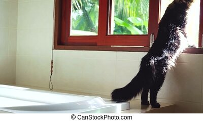 Funny Maine Coon cat standing at the window looking out outdoor on the palm trees in tropical jungle while traveling with his host in sunny day. 3840x2160