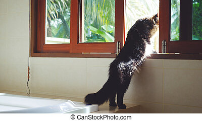 Funny Maine Coon cat standing at the window looking out outdoor on the palm trees in tropical jungle while traveling with his host in sunny day