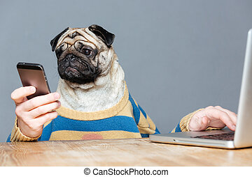 Funny man with pug dog head using laptop and smartphone