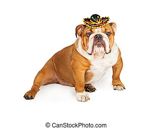Funny Mexican Bulldog Wearing Sombrero