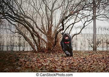 funny mixed breed dog running in autumn