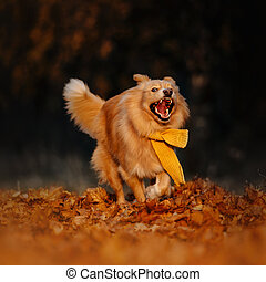 funny mixed breed dog running outdoors in autumn