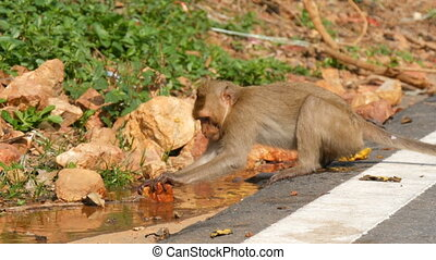Funny monkey washes brick in the water - Funny monkey washes...