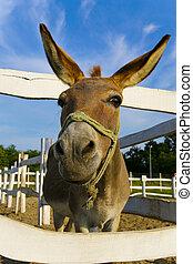 mule - funny mule on the farm enjoy sunny day