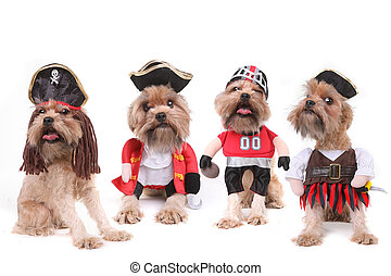 Funny Multiple Dogs in Pirate and Football Costumes