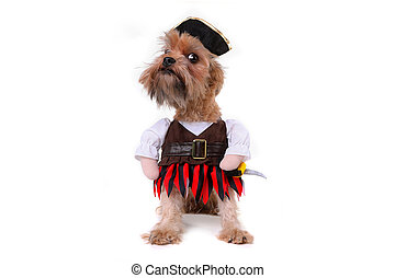 Funny Mutt Dog in Pirate Inspired Clothing Costume