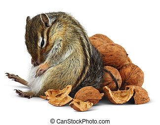 Funny overeating chipmunk with nuts, diet concept