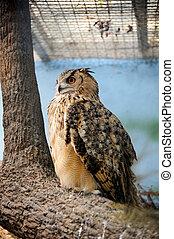 funny owl  close up