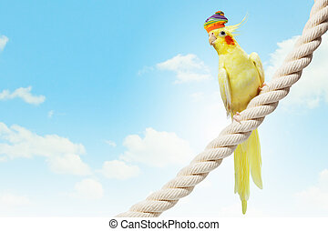 Funny parrot in hat