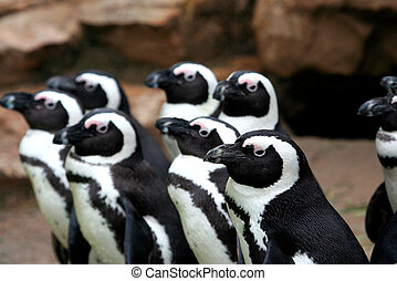Funny penguins looking in same direction - Group of funny...