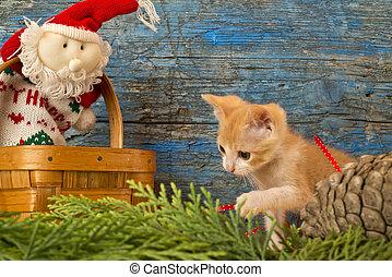 Funny playful cat, Christmas card