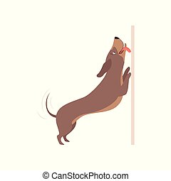 Funny playful purebred brown dachshund dog vector Illustration on a white background