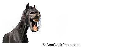funny portrait of a black horse isolated