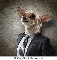 Funny portrait of a dog in a suit on an white background. ...
