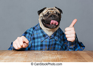 Funny pug dog with man hands showing thimbs up